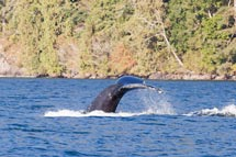 Whale watching and more at Island Tides BC fishing lodge.