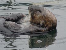 Whale, otters and other marine life at Island Tides BC fishing lodge.
